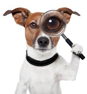 Rassebestimmung DNA TEST Hund