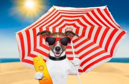 Damit der Urlaub mit Hund nicht zum Alptraum wird