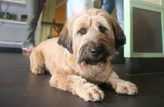 Mischlingshund AMY beim ORF dreh