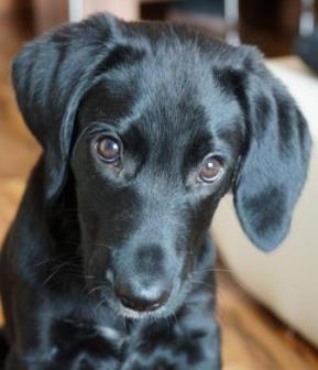 Mischlingshund Anhand Seines Aussehens Bestimmen