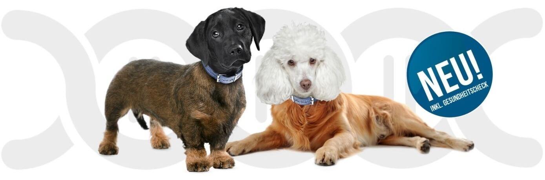 Der Test für Mischlings Hunde