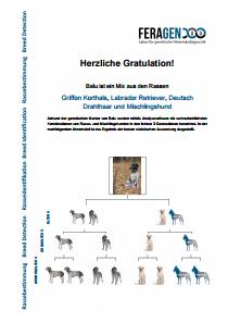 DNA Test Hund - die Rassebestimmung - Musterbefundmappe Frankling - Ein Parademischling