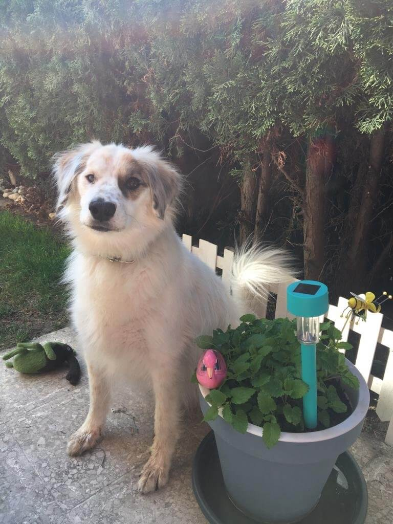 Jack's Dog Story