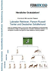 DNA Test Hund - die Rassebestimmung - Musterbefund von Kira einem reinssaigen Mix