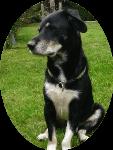 DNA TEST Hund - Rassebestimmung von Lucky