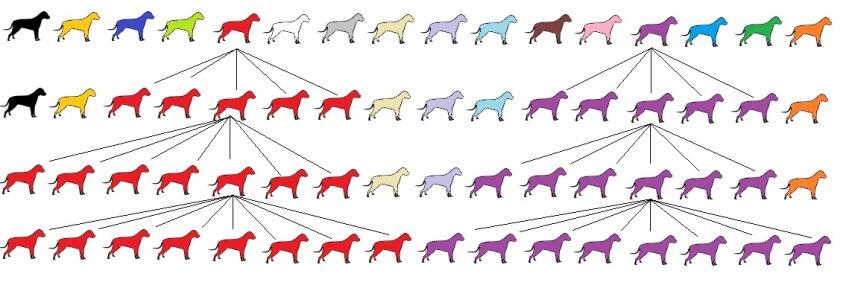 Hundezucht und Ihre Auswirkung anhand des Popular Sire Syndrom