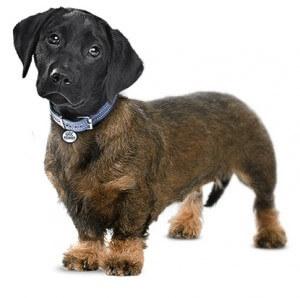DNA Test Hund