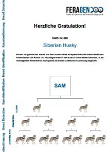 DNA Test Hund - die Rassebestimmung - Musterbefund von Sam ein reinrassiger Siberian Husky