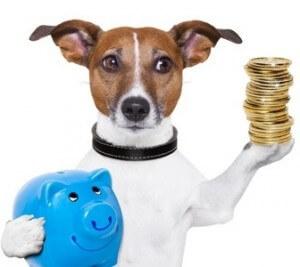 DNA Test Hund - Rassebestimmung - Sparen Sie bares Geld