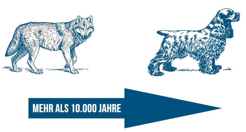 Merkmale - Wolf_Hund_10000