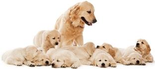 Hundezucht Probeneinlagerung