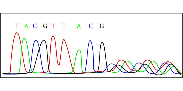 Wissenschaft einfach erklärt: Das Elektropherogramm (DNA)