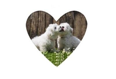 DLA Studie 2 - Dogs in Love
