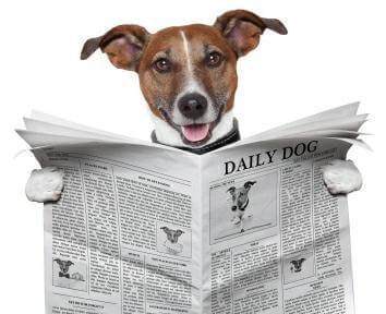 Hund mit Newsletter