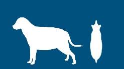 Berechung des wahrscheinlichen Gewichtes - dog_fettleibig