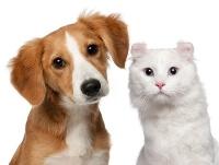 DNA Test für Hund und Katze
